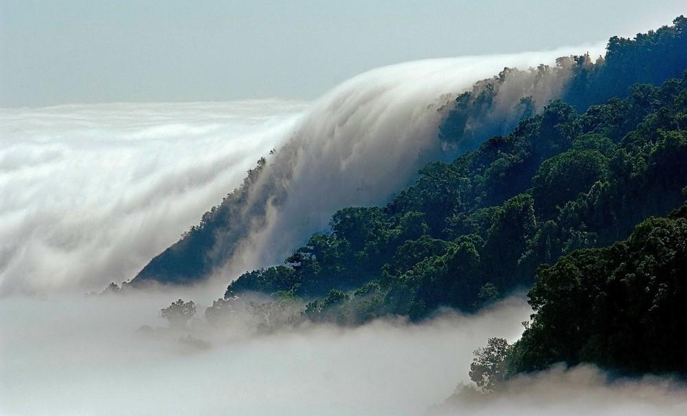 Bosque de Niebla. El triunfo, chiapas - copia