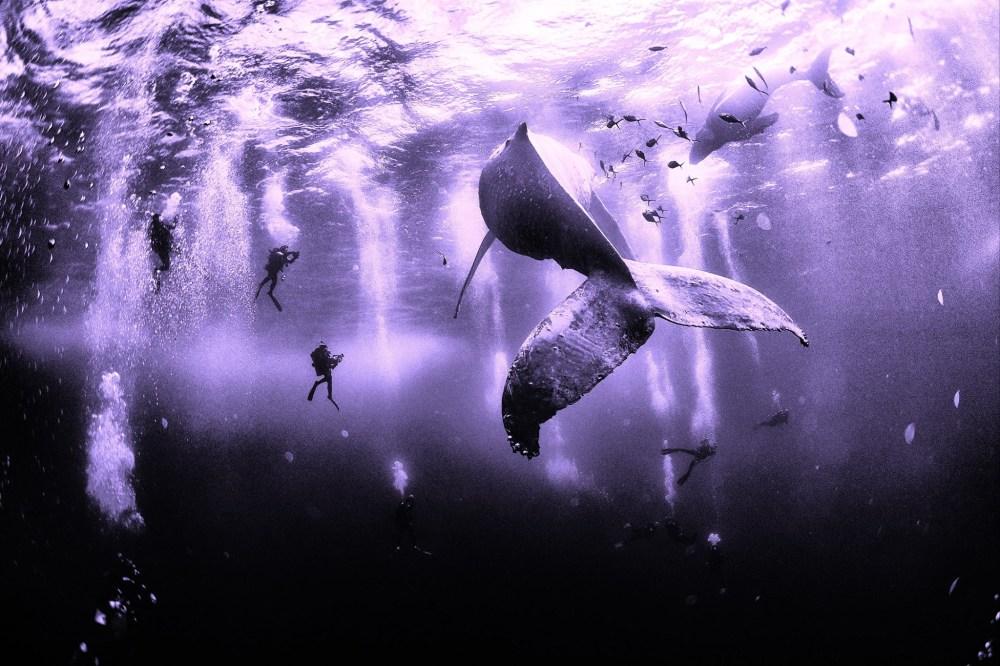 Santuario de las ballenas jorogadas, Pacifico mexicano